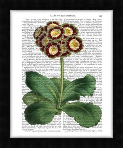 190302D-Primula-Auricula-Red2