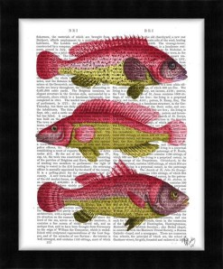 190416D-Red-and-Yellow-Fantasy-Fish-Trio2